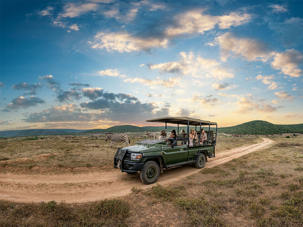 An open safari vehicle on a sand track with guests looking out at zebras in the wilderness.