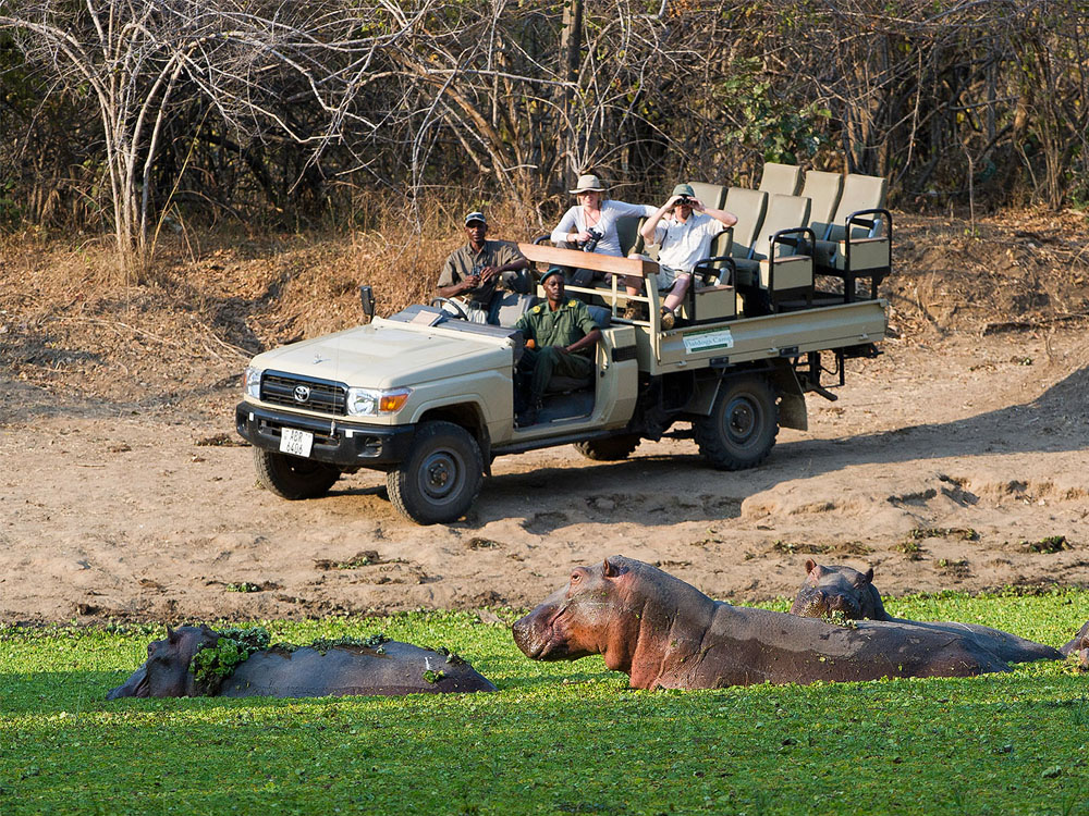 Game view in Zambia