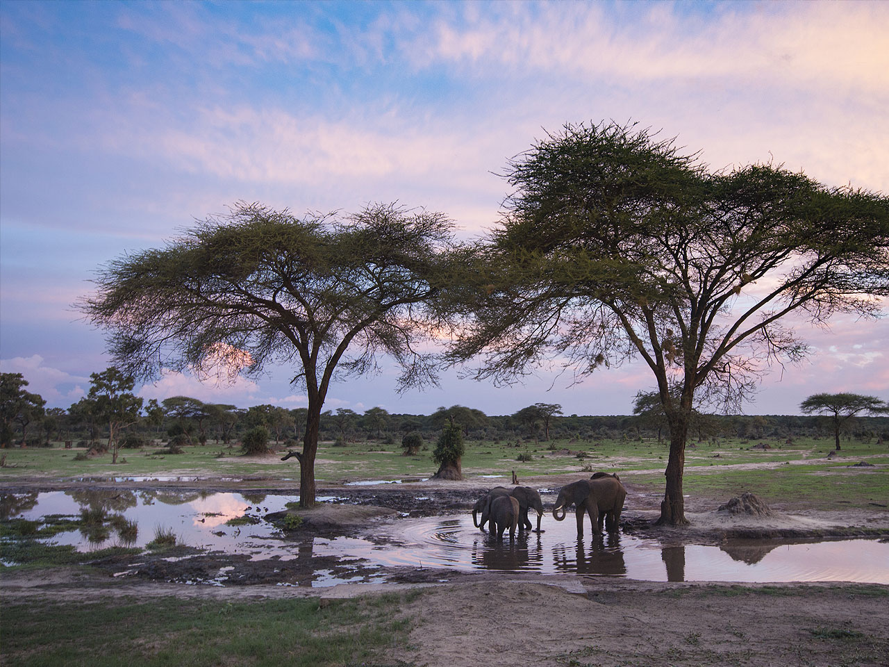 Elephants playing in the water beneath trees with a typical Zimbabwe landscape in the background.