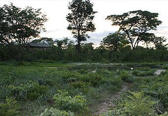 Miombo Safari Lodge