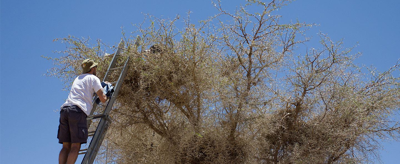 Saving Namibia's Vultures