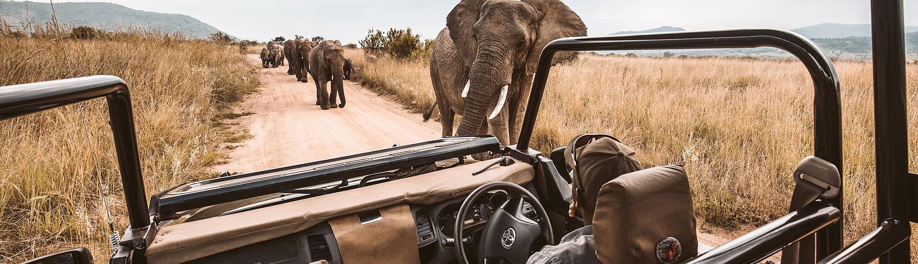 Types of Safari Guides