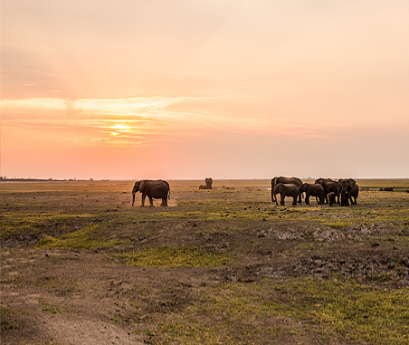 Best time to Visit Chobe National Park