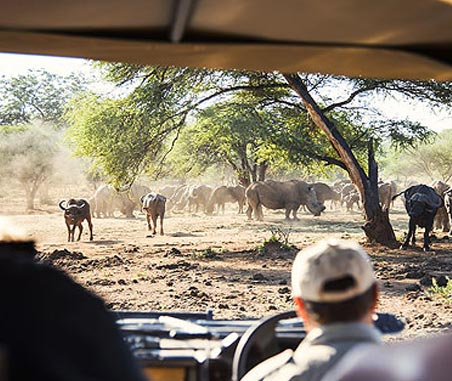 Best Time For... Game Viewing