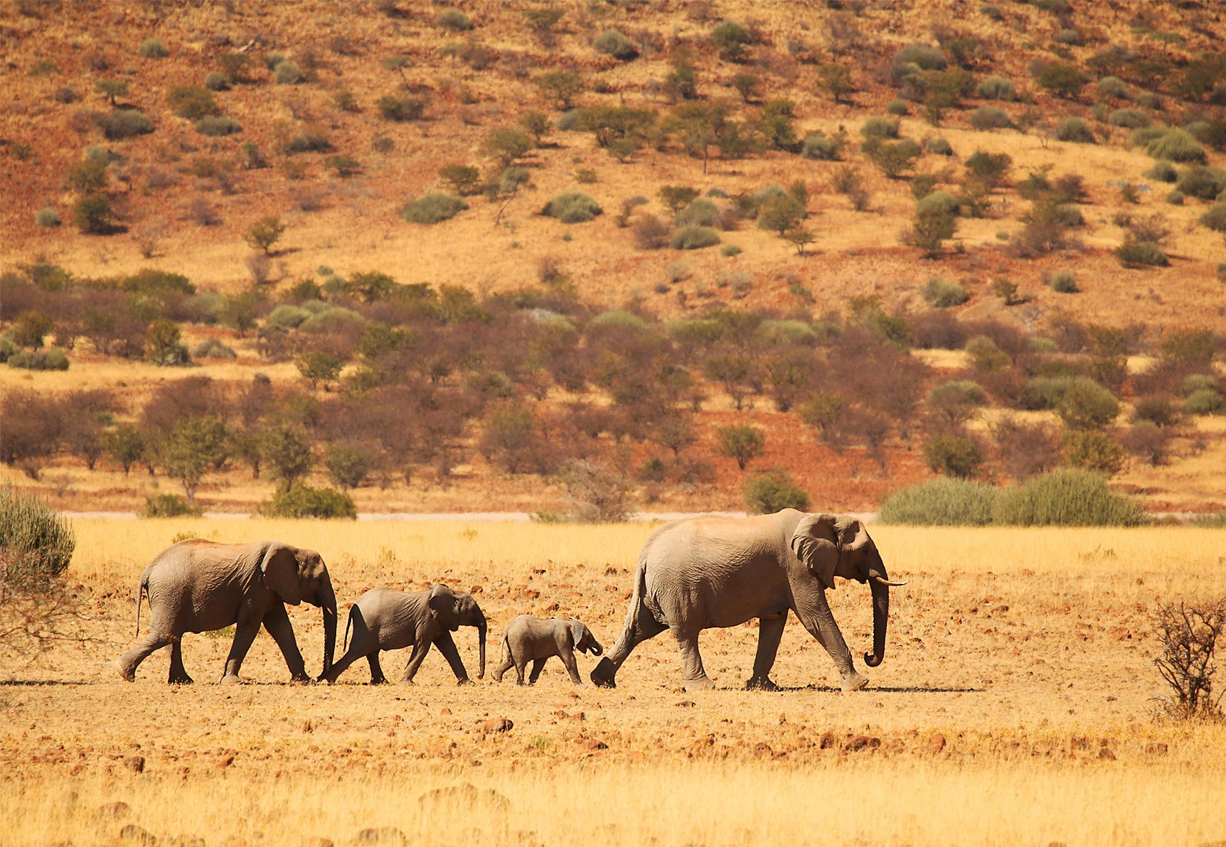 Top 10 Things To Do in Namibia inline image 60b88b4bc9944