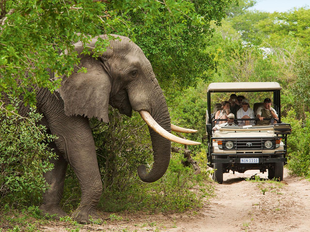 Garden Route Safari