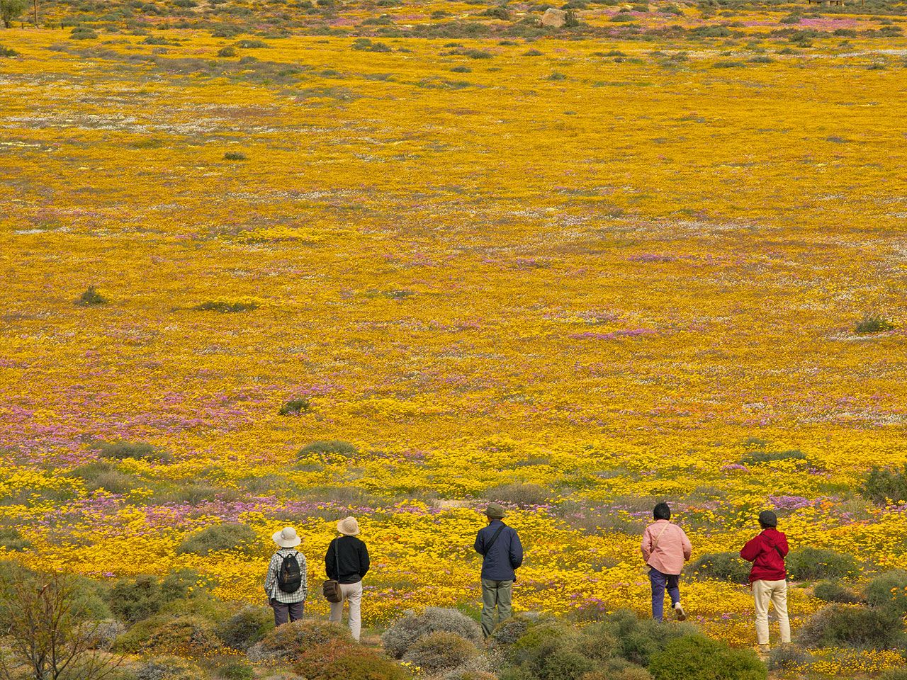 Namaqualand and Northern Cape