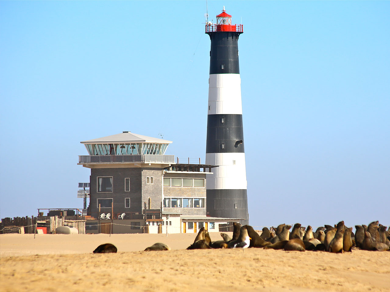 The lighthouse and Pelican Point Lodge on Pelican Point with seals.