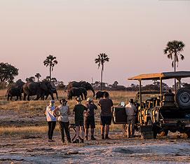 Best of Zimbabwe Safari