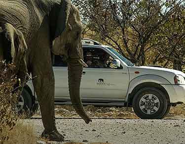 Self-drive Safaris