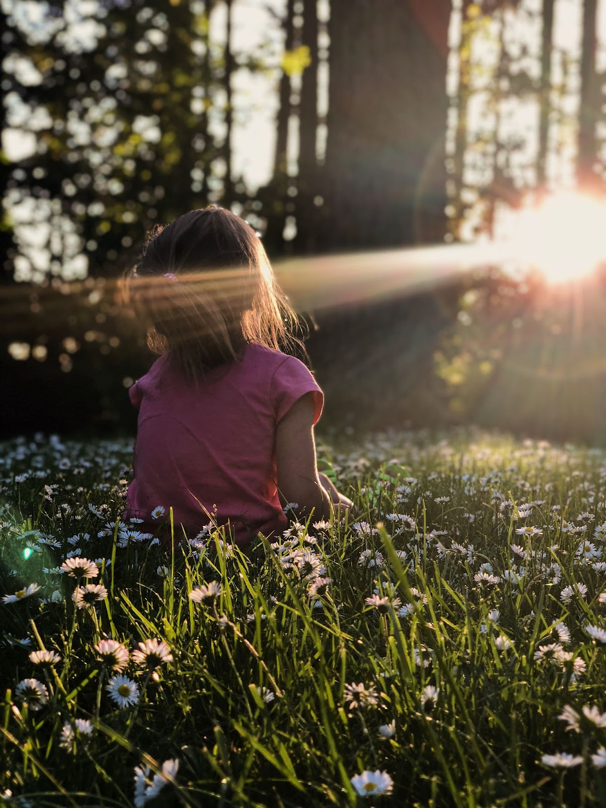little girl sitting in a field of daisies