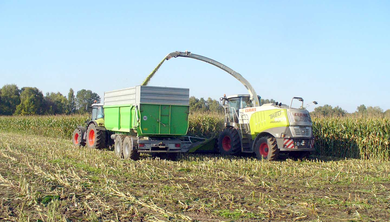 Landwirtschaftliche Fahrzeuge bei der Maisernte