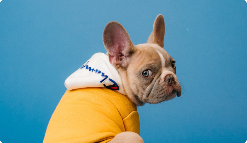 How Petplan slashed labor costs by 15% in 2 weeks by digitizing their claims solution with EasySend
