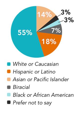 team ethnicity pie chart