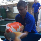 This Picture represents Andrew from Koi Water Gardens Ltd