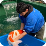 This Picture represents Abby from Koi Water Gardens Ltd