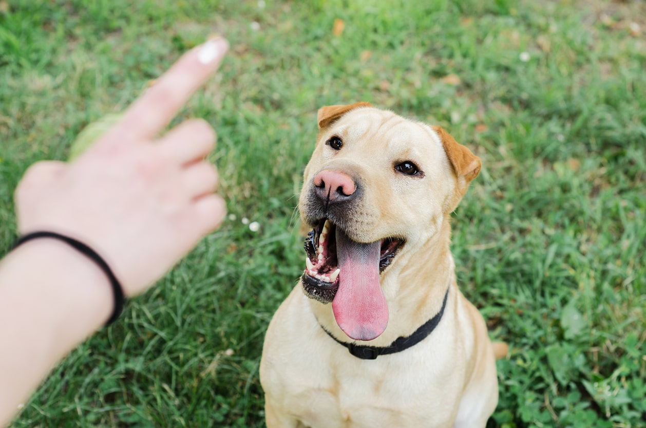 Disciplinary and Dismissal Procedures - for Employees. Image of woman telling off a dog | Crunch