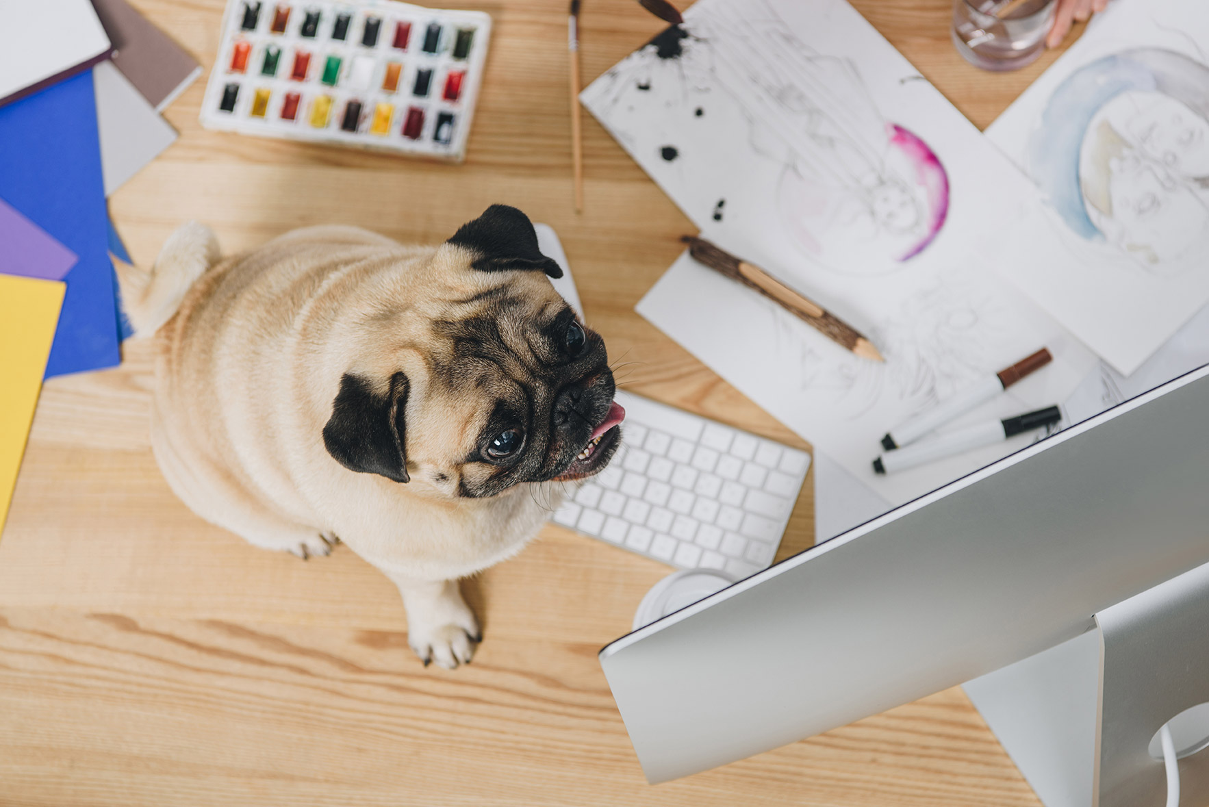 Work stress - how to deal with it when self-employed, image of a pug on the table | Crunch