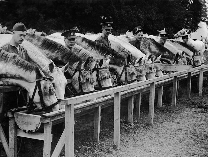 Historic picture of soldiers and their horses