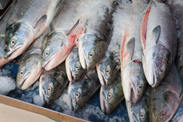 In Alaska's remote Bristol Bay, wild salmon fisheries are doing booming business with record-breaking profits thanks to a push for increased product quality.
