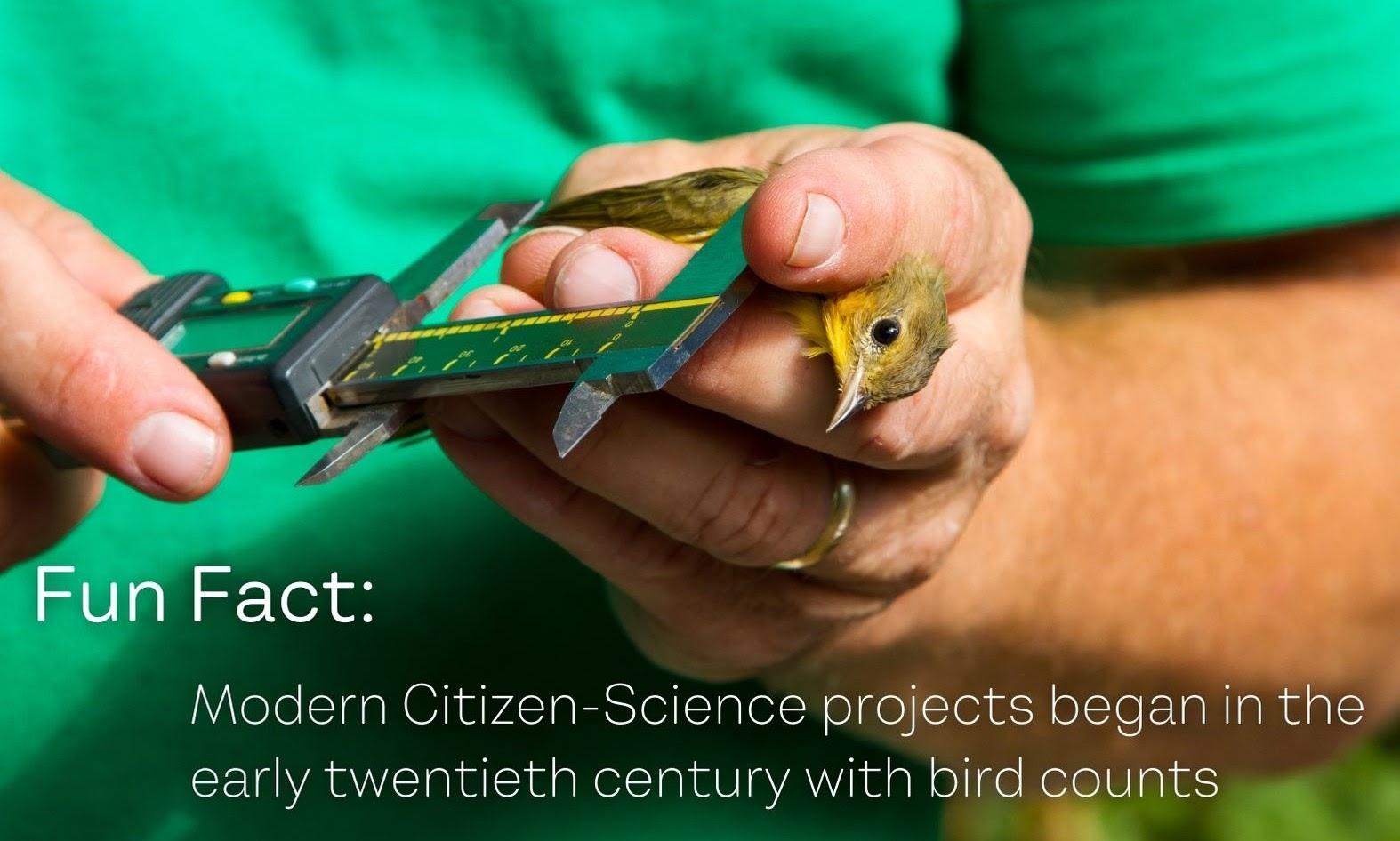 bird_counts