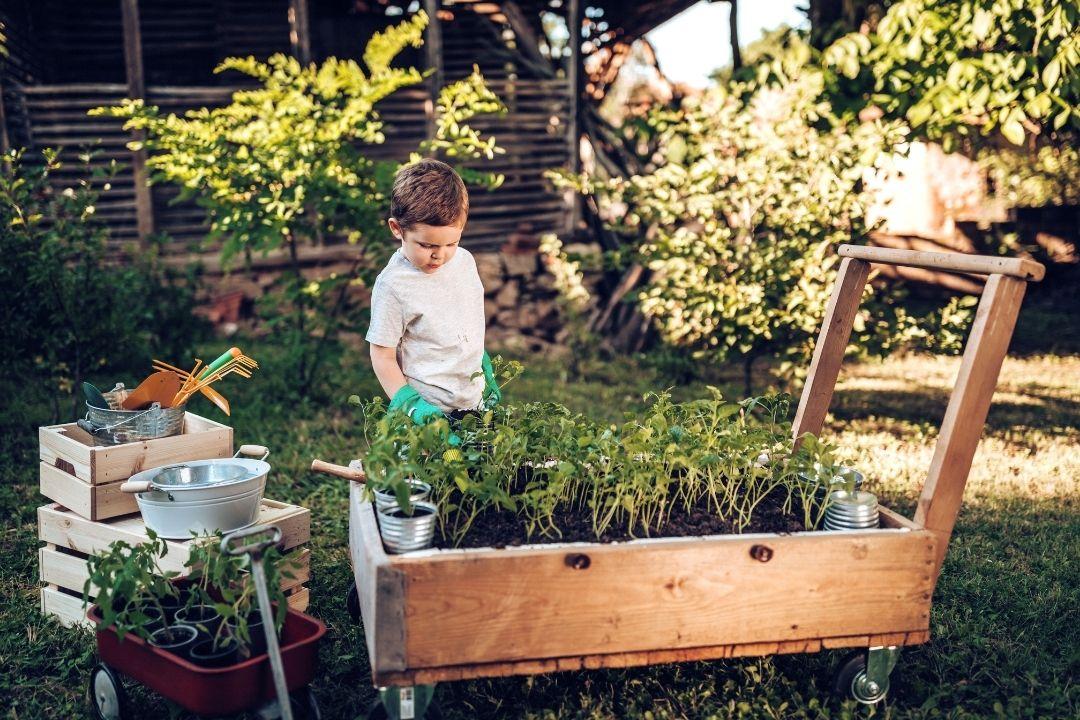 little boy working in garden