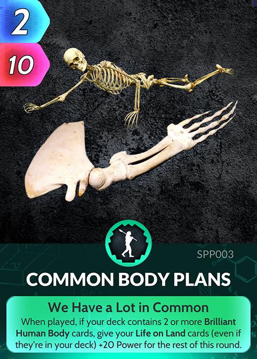Common Body Plans