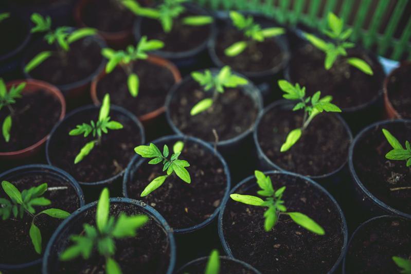 Quable passe au vert : notre démarche éco-responsable