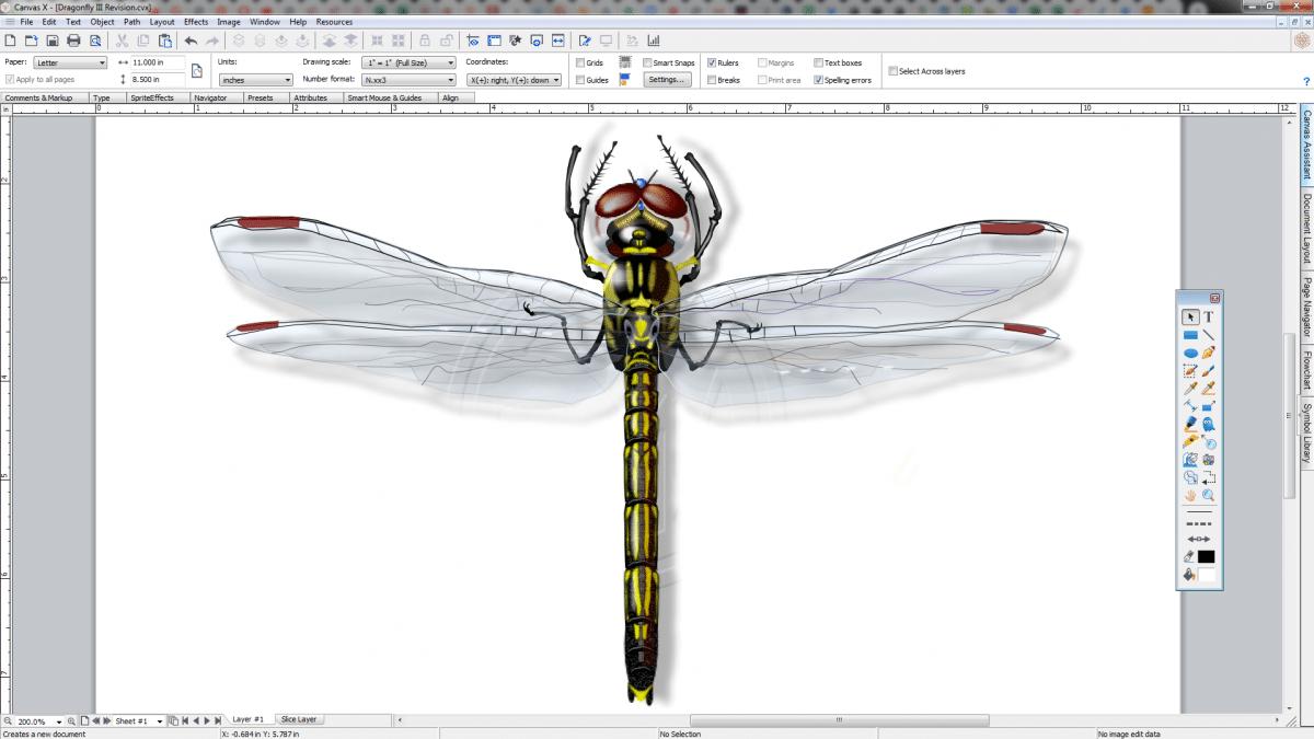 Jim Wayne dragonfly illustration