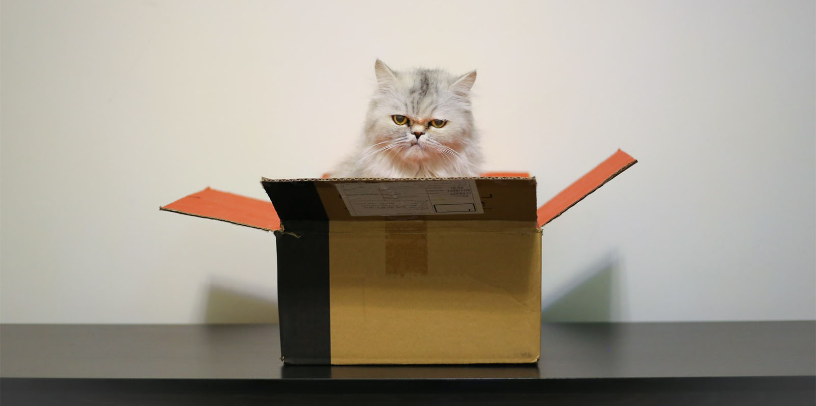 Is Your Data Trapped in a Black Box like Schrodinger's Cat?