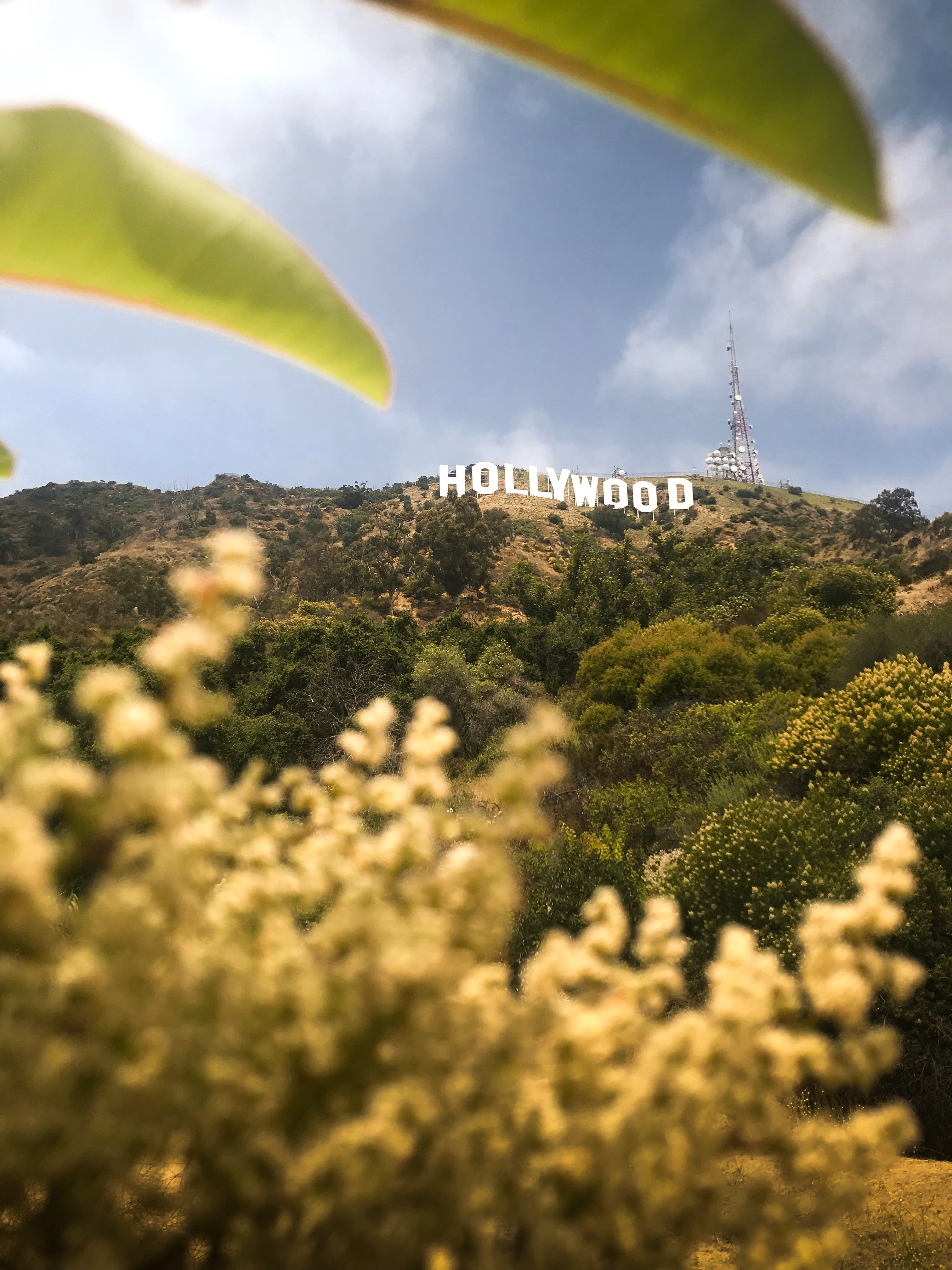 Hollywood Sign from afar with flowers