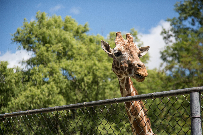 Réouverture du zoo du parc de la Tête d'Or aujourd'hui !