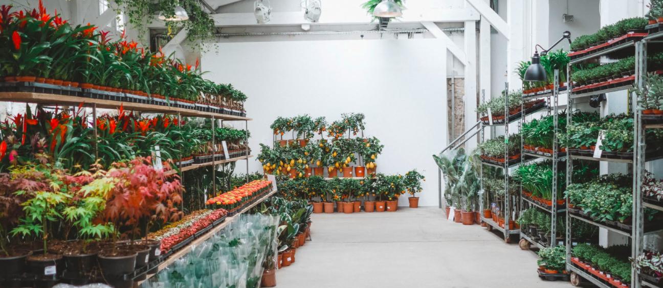 Grande vente de plantes à l'Hôtel Dieu ce week-end !