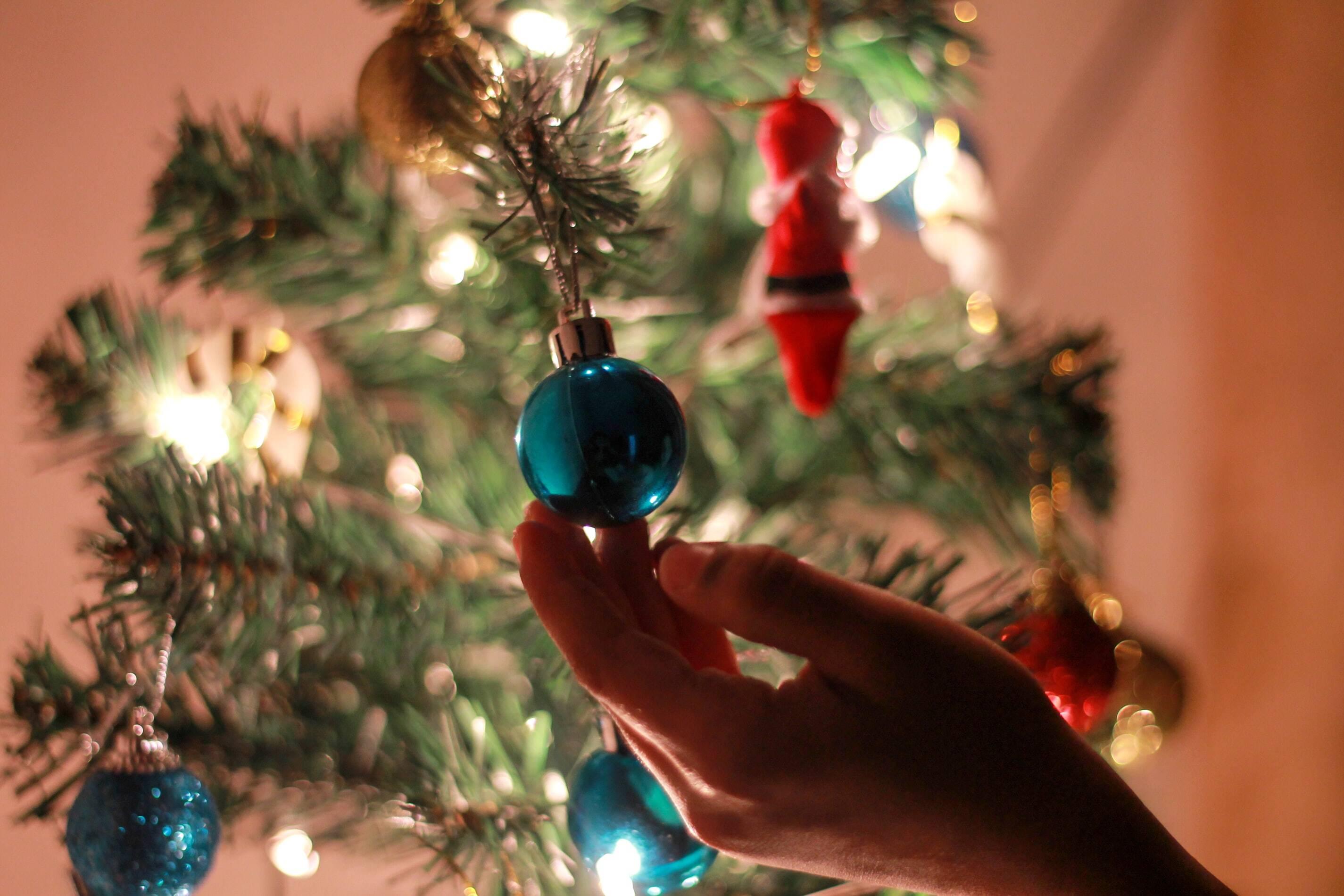 Où acheter son sapin de Noël cette année ?