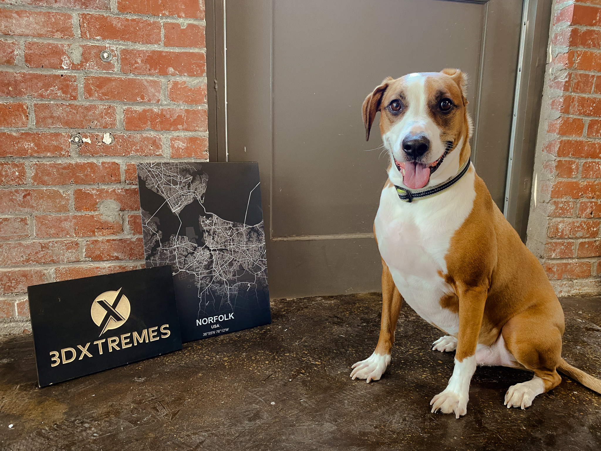 3DXtremes National Dog Day
