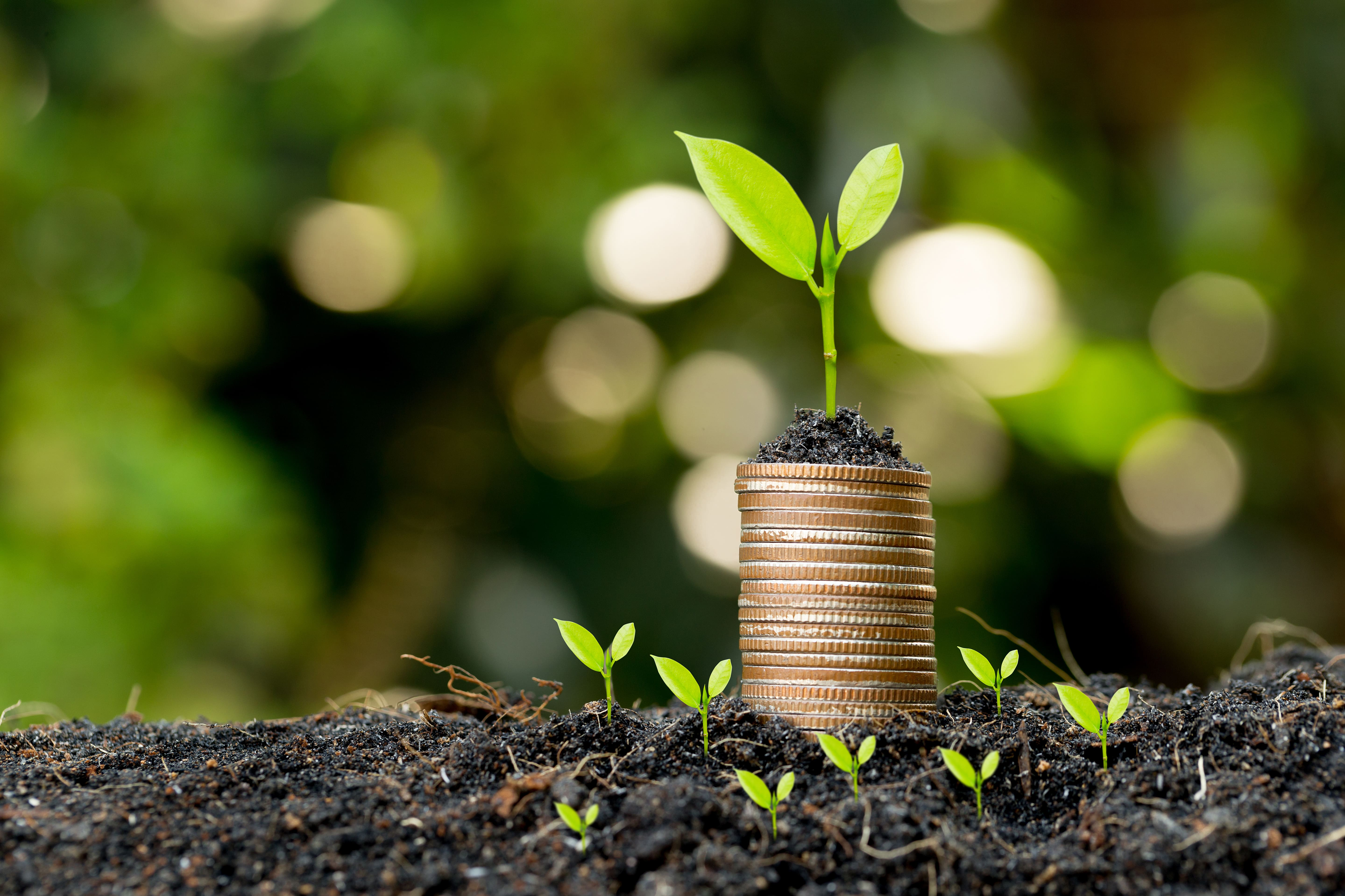 Investing showed through a plant growing