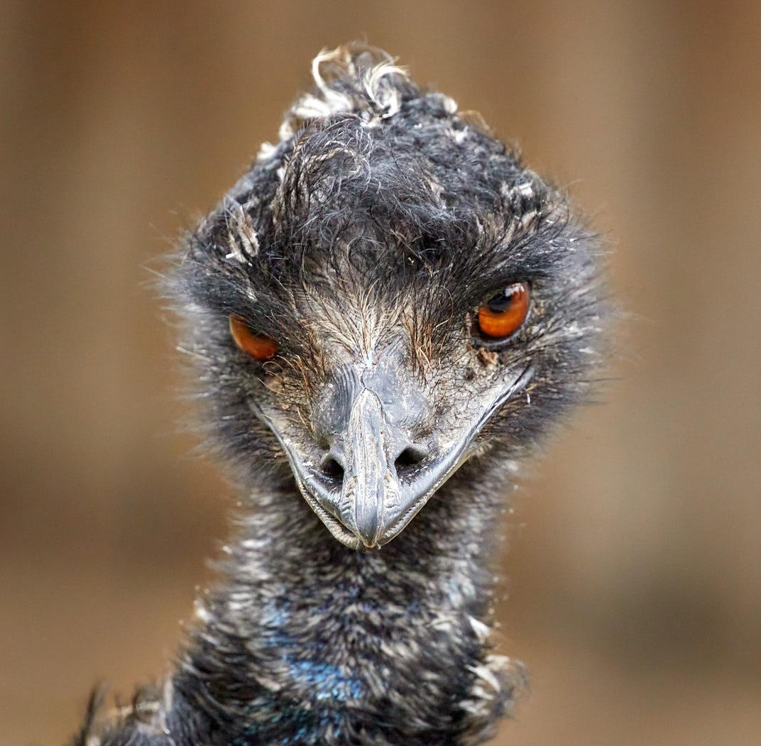 GetSetUp Photo Challenge: Week of July 2 - Zoo Animals Photography