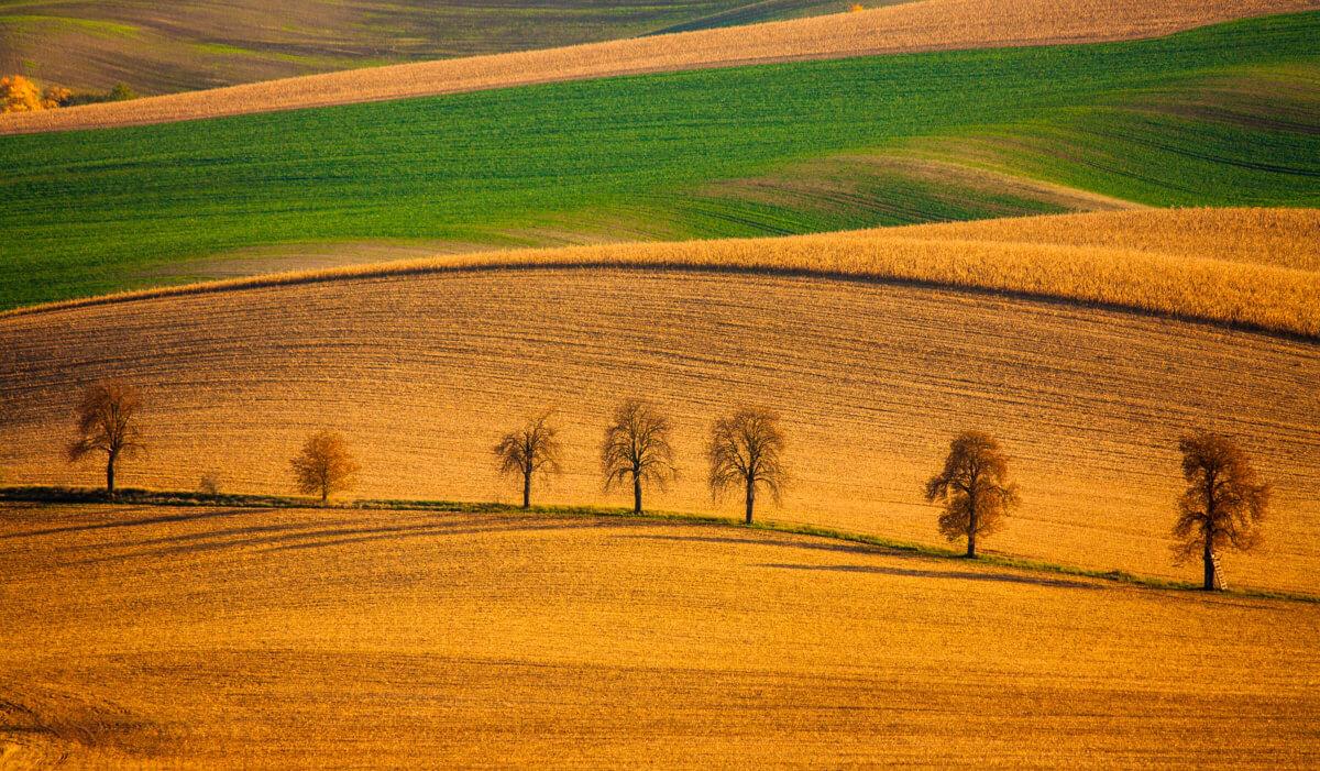 Perfect Fields