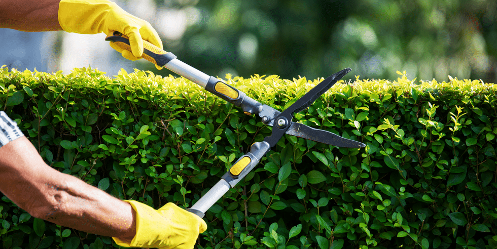 Prevention trimming-hedges-1590497473