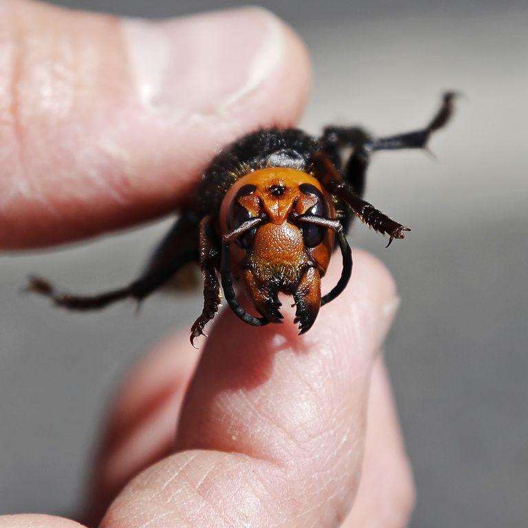 pop mech washington-state-department-of-agriculture-entomologist-news-photo-1590609739