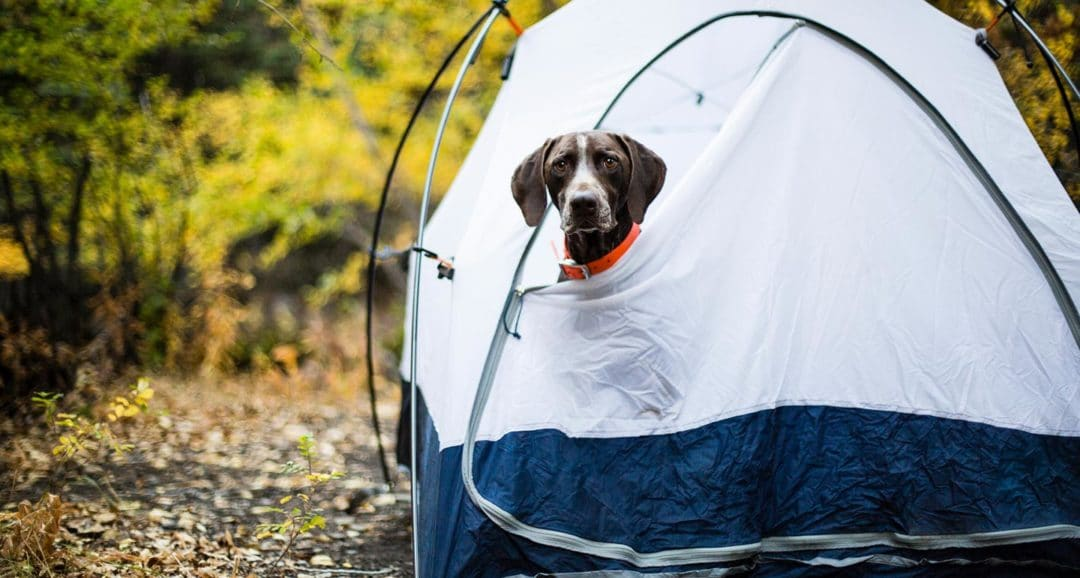 camping-with-dogs-1080x578