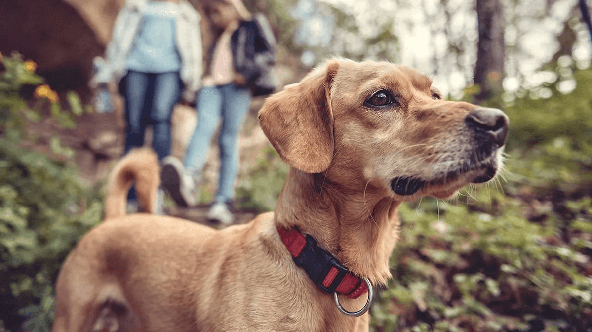 CR-Health-InlineHero-Pets-Ticks-0617