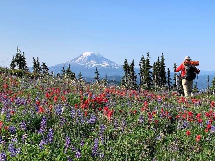 Mike-Unger-PCT-Mt-Rainier-wildflowers