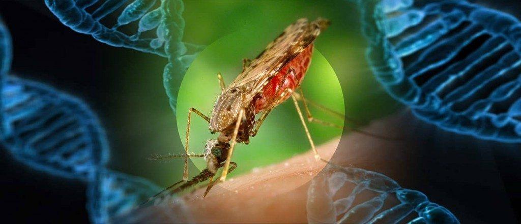 yale study mosquito_gene-min-1024x441-1024x441-1024x441-1024x441