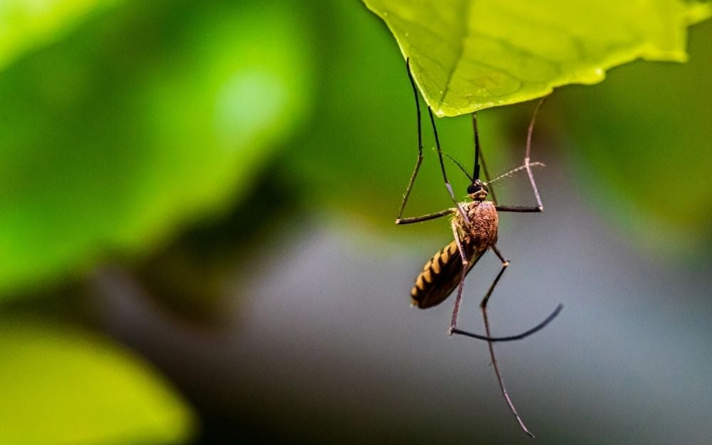 Best-insect-repellents-to-battle-this-guy-1