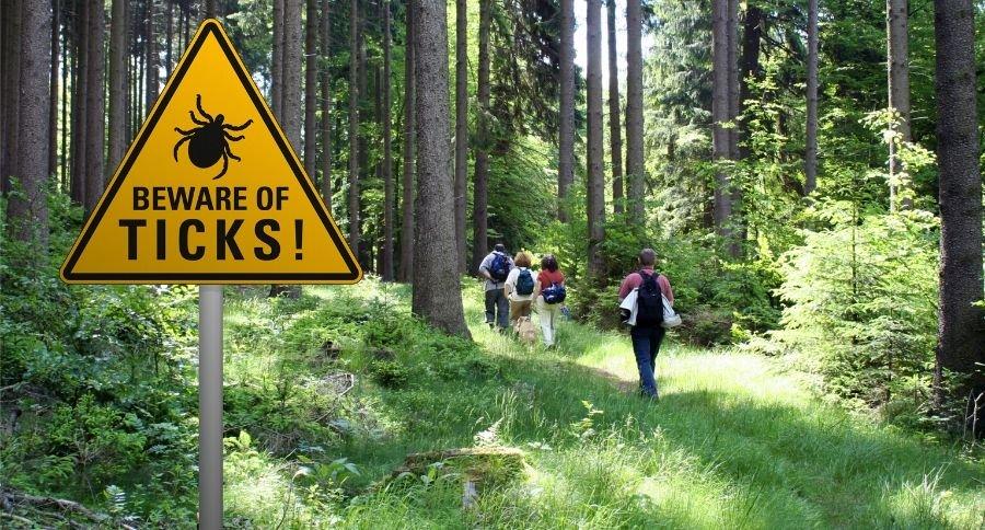 Wide Open Spaces tick-in-woods-FI