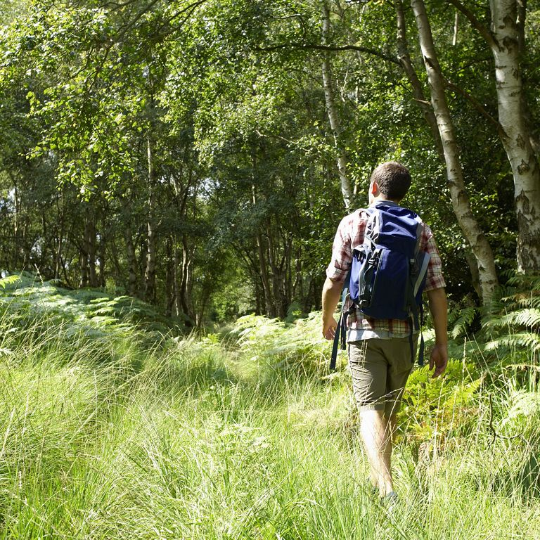 Mens Health not get bitten young-hiker-walking-through-woodland-royalty-free-image-90421933-1558131152
