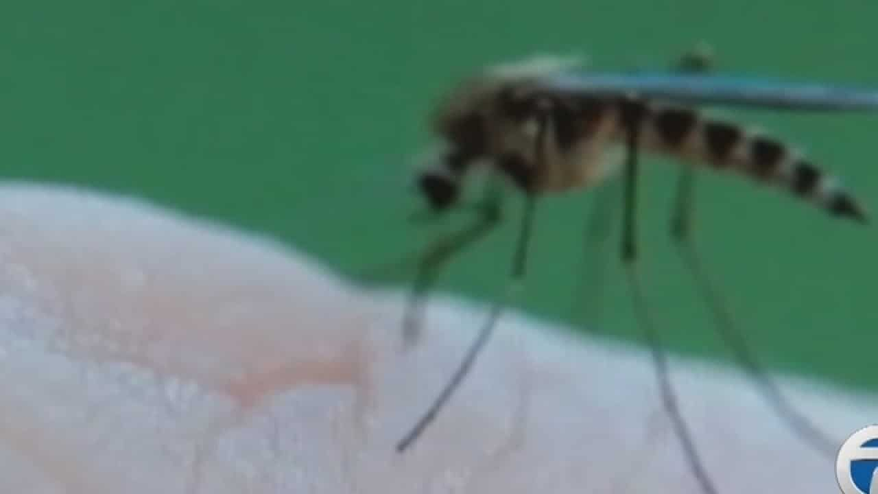 WXYZ best insect repellents