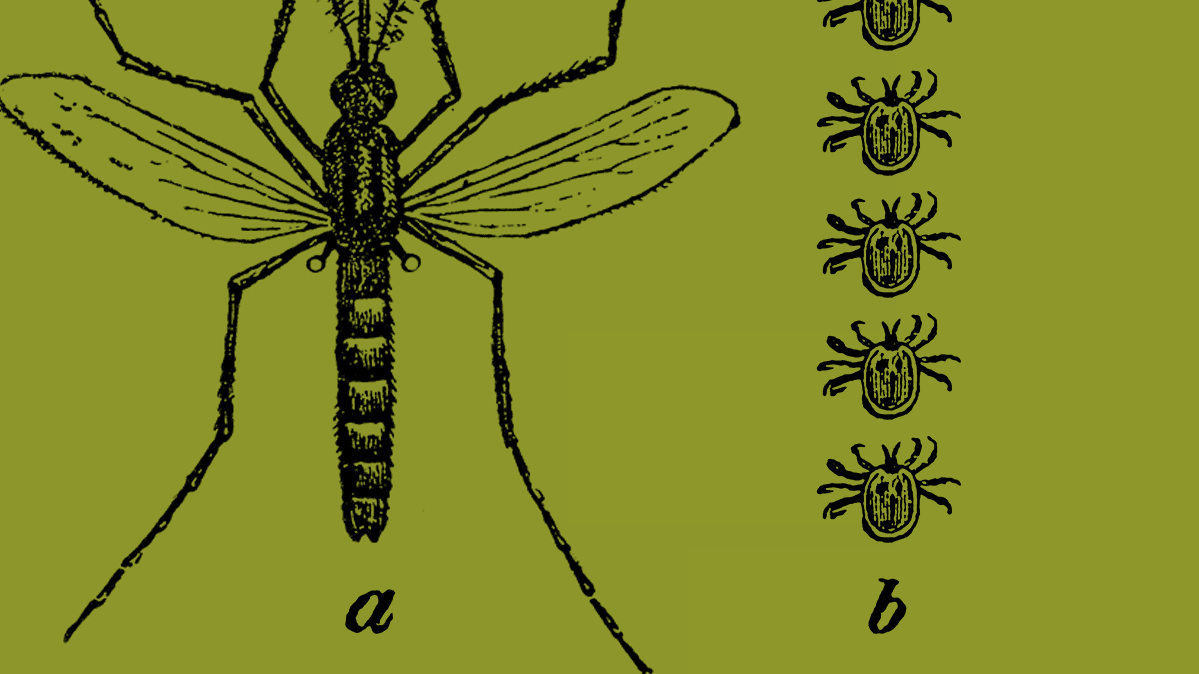 CR-Health-Inlinehero-how-to-keep-away-ticks-and-mosquitos-0419