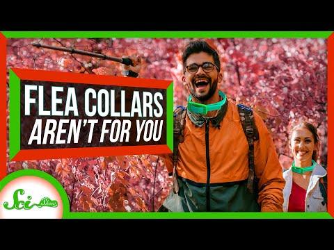 SciShow Flea Collars thumbnail